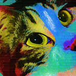 Fun Funky Cats Eyes - because I love cats eyes :)