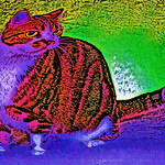 Fun Funky  Cat Art to make you smile :)