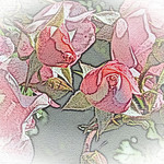 old-time-rose-maplewood-0055