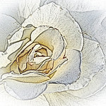 old-time-rose-maplewood-0013
