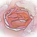 old-time-rose-maplewood-0068