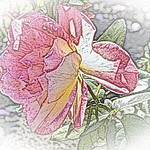 old-time-rose-maplewood-0044