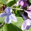 wonderblue-DSC01514 Lilac photos by Deborah Carney