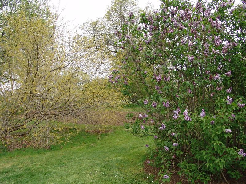 oblata-DSC03073 Lilac photos by Deborah Carney