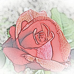 old-time-rose-maplewood-0026