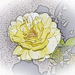 old-time-rose-maplewood-0024