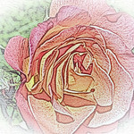 old-time-rose-maplewood-0034
