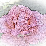 old-time-rose-maplewood-0096