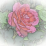 old-time-rose-maplewood-0046