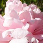 john-davis-roses-bbg-59
